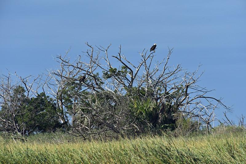 Jekyll Island Boat Tours - Eagles 10-24-19