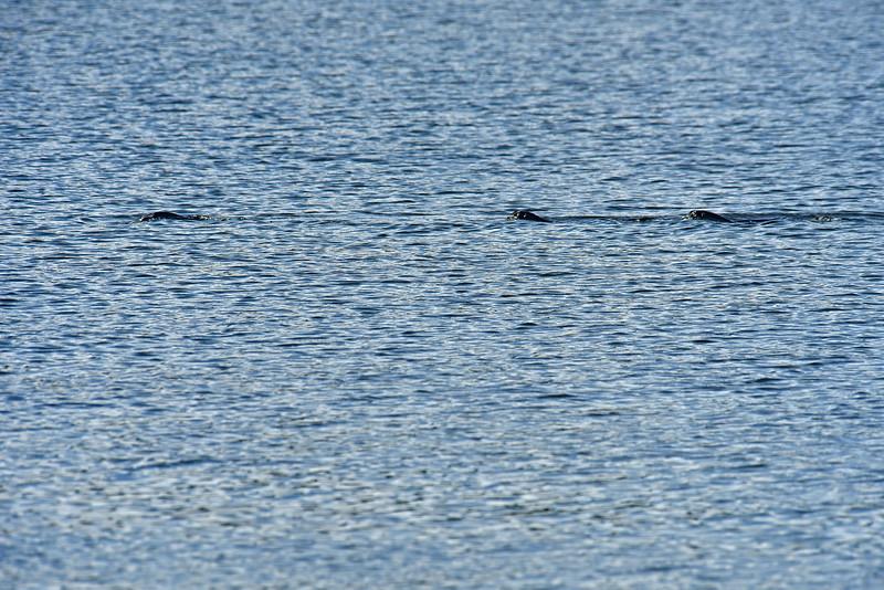 Jekyll Island Boat Tours - Epworth Otters 10-03-19