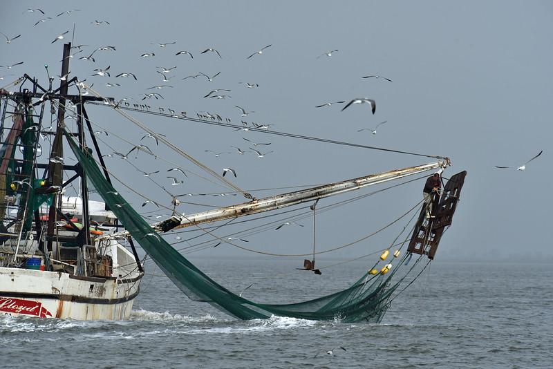 Jekyll Island Boat Tours - Little Lloyd Shrimp Boat  11-07-19