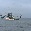 Jekyll Island Boat Tours - Little Lloyd Shrimp Boat  11-07-19