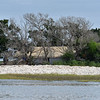 Little Racoon Key off Jekyll Island 04-06-19