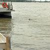 Jekyll Island Boat Tours Dolphin Daze Dolphin 08-06-20