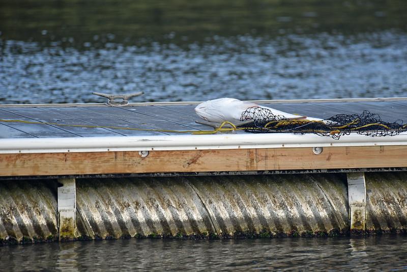 Jekyll Island Boat Tours - Red Fish caught off Jekyll B oat Ramp Dock 10-26-19