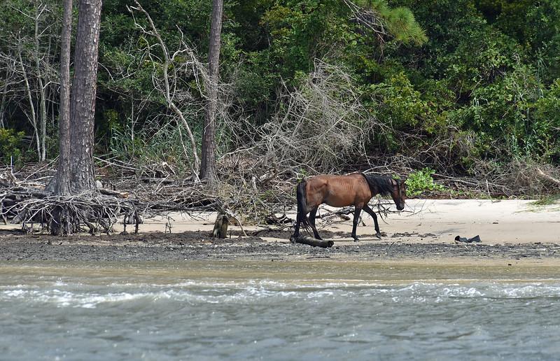Jekyll Island Boat Tours - Sea Fox 07-28-19