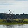 Jekyll Island Boat Tours - Osprey on Little Cumberland 08-04-19