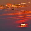 Jekyll Island Boat Tours Sunset 05-12-18