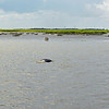 Jekyll Island Boat Tours Wedding 06-20-20