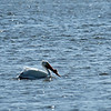 Jekyll Island Boat Tours - White Pelican 03-14-21