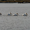 Jekyll Island Boat Tours - White Pelican 11-29-18