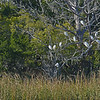 Jekyll Island Boat Tours - Bird Tree 11-29-18