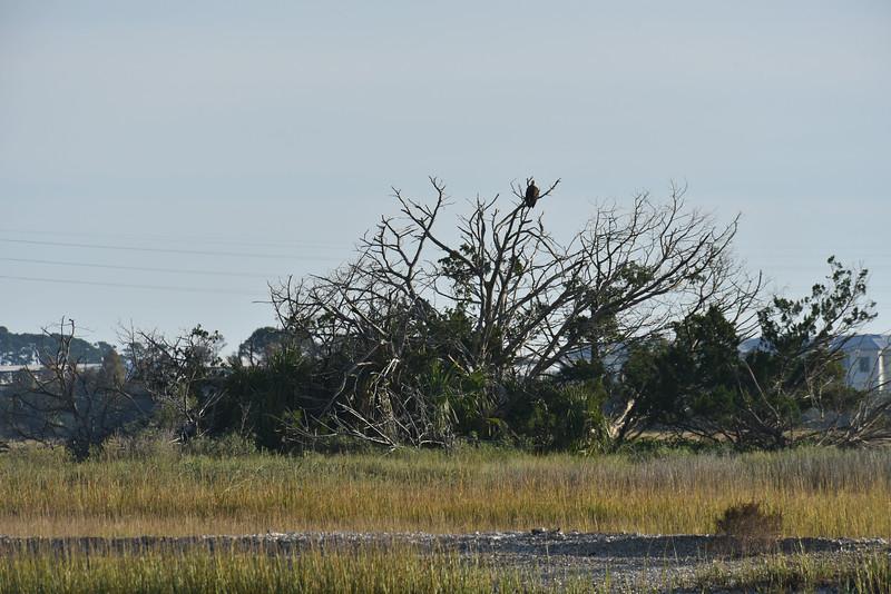 Jekyll Island Boat Tours - Bird Tree 11-29-18
