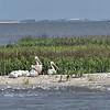 Jekyll Island Boat Tours White Pelican 04-08-19