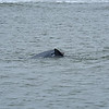 Dolphin Tour - Jekyll Island Boat Tours 04-08-18 WARNING X-RATED