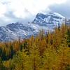Larch Valley
