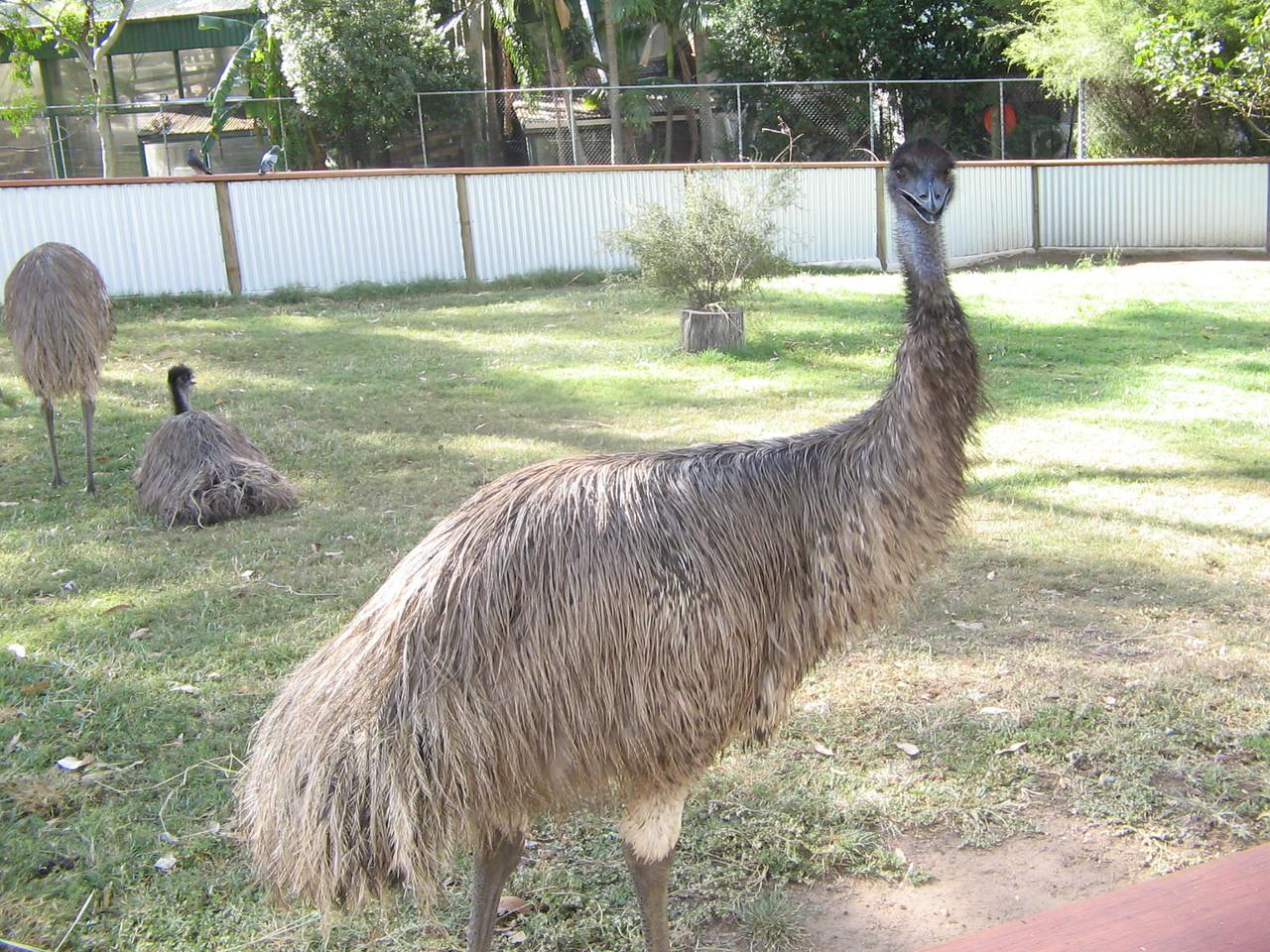 hello emu