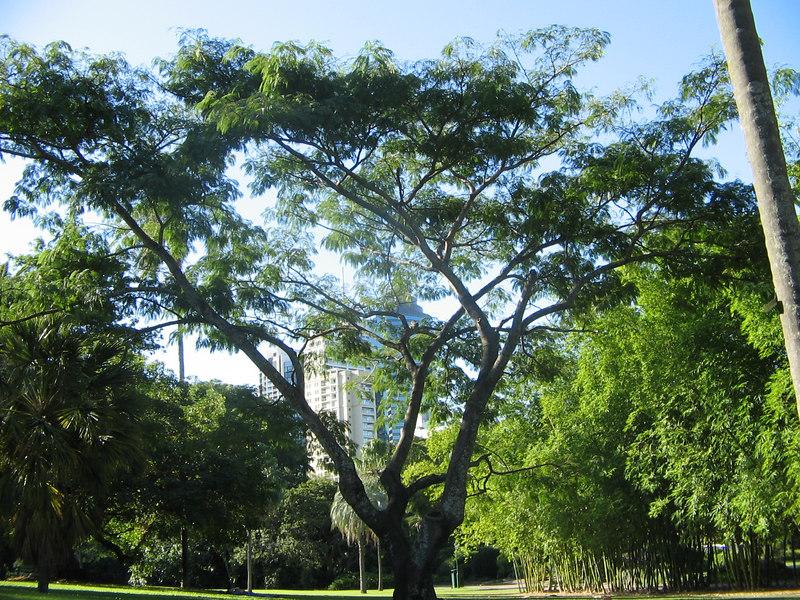 bris botanical gardens