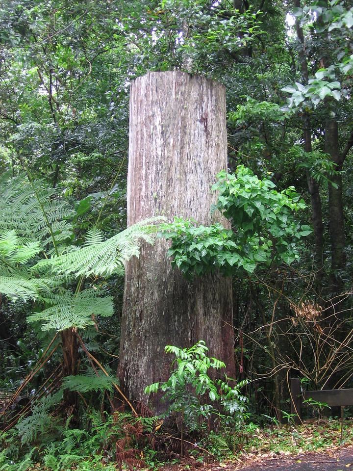 tree - sort of