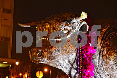 DSC_2735 Major the Bull head shoulders brtr BEST
