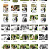 Betsy & Patrick contact sheets-24