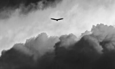 Above the cloudsArenal, Costa Rica4.21.2010