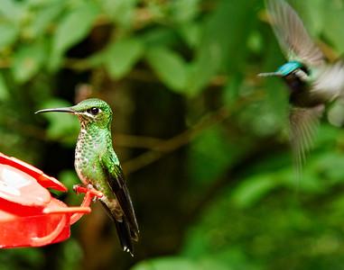 Hummingbird hangout                           Monteverde Cloud Forest, Costa Rica4.24.2010