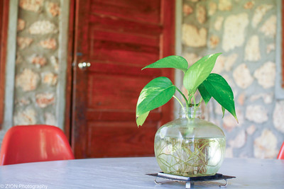 A plant sits on a table outside of a hotel room in Haiti