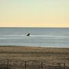 whale Belmar -175