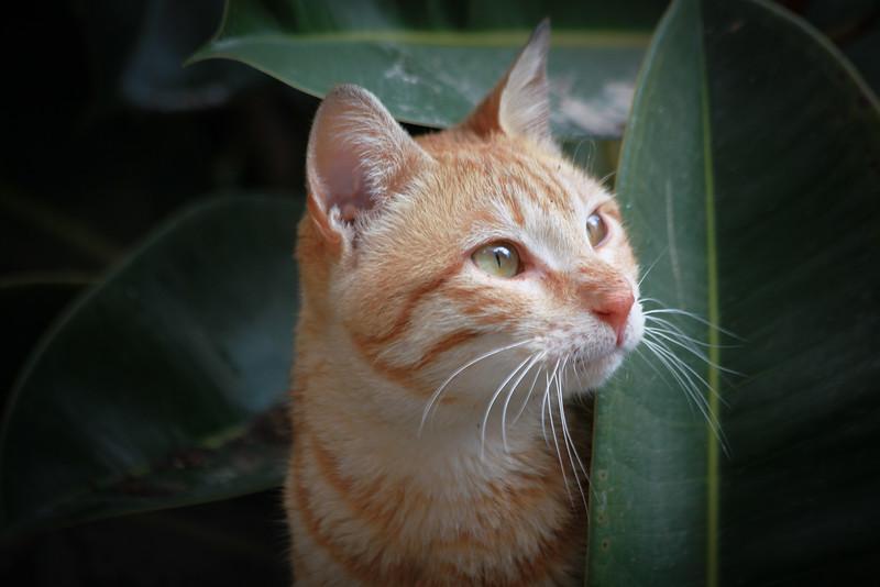 jerusalem cats