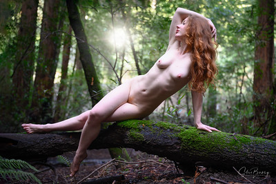 Forest Beauty III