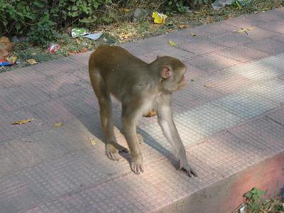 2007 (10/15 - 10/19)India, Chennai