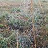 Jeweled Dewdrop Spiderweb