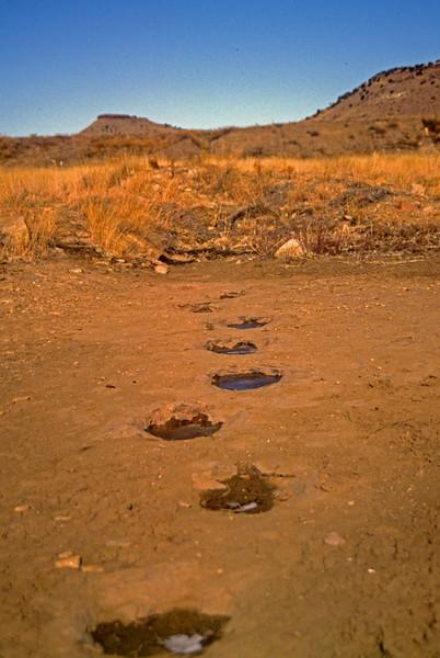 Dino tracks in SE Colorado
