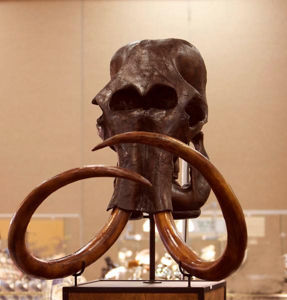 Cast replica of mastadon skull
