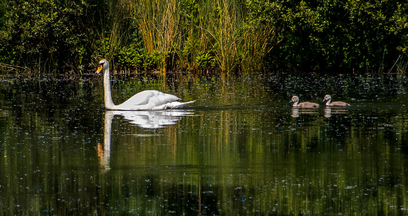 Cotswold Water Park 19th June-8470.JPG
