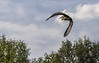 Cotswold Water Park 19th June-8576.JPG