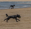 Ogmore By Sea 20th June-8640.JPG