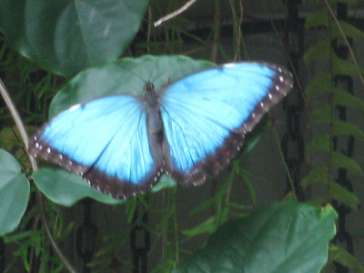 2009-07-01 Detroit Zoo