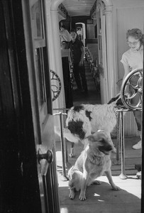 2016.020.98.233--jim neubauer 828 neg--D&RGW--view from on board The Silverton of dogs in transit--location unknown--c1952 0000