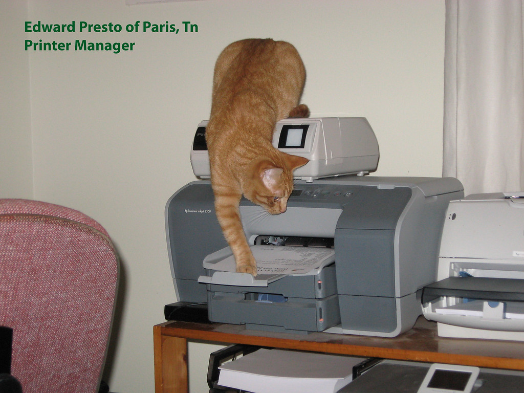 Presto, one of our two cats, is in charge of retrieving output from the printer. What to do with it is the responsibility of other office personnel. .