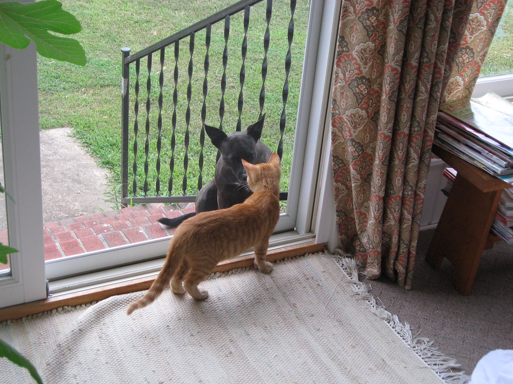 Young Presto greets his neighbor Gin-Gin