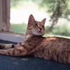 This is Michael ('M' on his head) one of our several cats over 38 years in Westford.