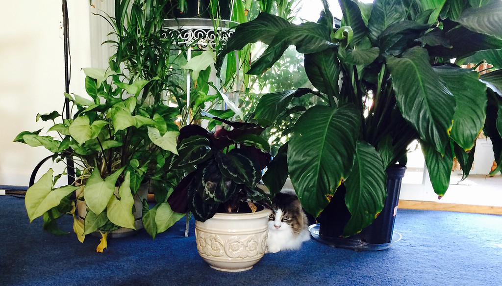 This is Corky's private jungle - apparently she feels comfortable 'hiding' among the plants Mary has arranged for her.