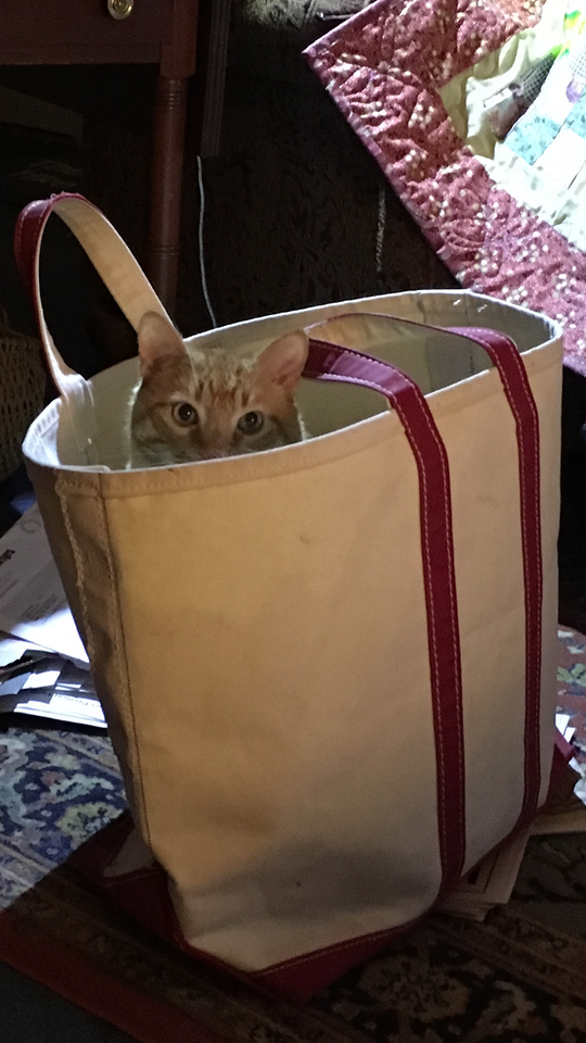 Hey Presto, that's not your bag!