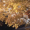 The splendor of Fall maple tree leaves, not common on Vose Road where oak trees were the predominant species.
