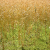 Summer Grasses are a joy.