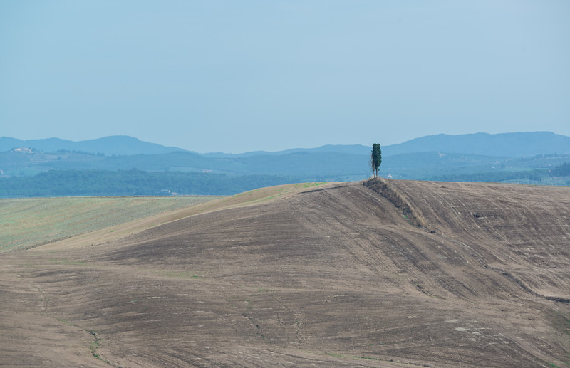 A lonely tree amongst the rolling fields just south of Siena. The landscapes here are defined by contrasting textures and colours.