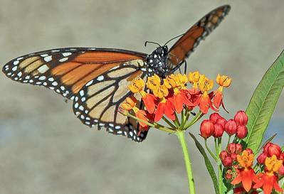 Butterfly in Bird Sanctuary in Kuala Lumpur Malaysia
