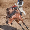 Cowboy slips from bronco Cave Creek Rodeo 30 March 2014
