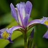 Flower from Irish Garden