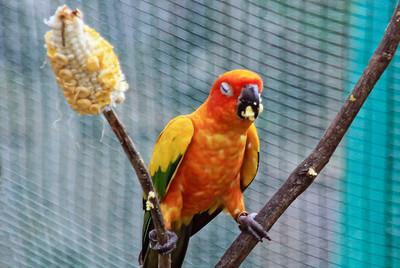 KL Bird Sanctuary Malaysia